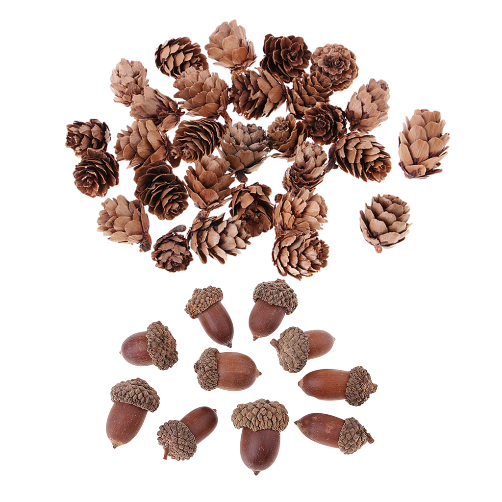 10pcs Real Natural Dried Flowers Acorns for Accents Decoration Ornaments DIY