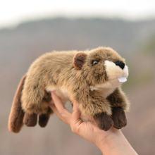 Маленькие спящие мягкие животные, реальная жизнь, плюшевые реалистичные мини-игрушки для животных Uso De Pelucia Kawaii, декор для комнаты KK6FZM(Китай)