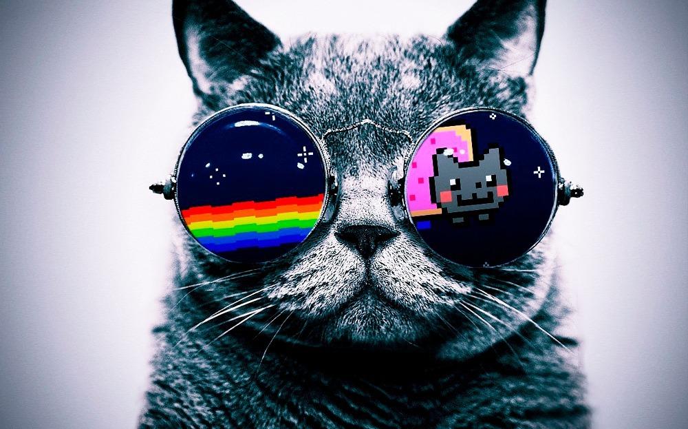 Cool Macro Nyan Cat Glasses Silk Cloth Poster 40 x 24