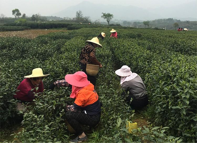 Yuhou orgânica Chinês Xihu Longjing Chá Verde 250g, Xi Hu Long Jing Chá Verde China, Hangzhou West Lake Dragon Well Tea