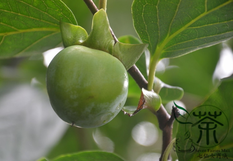 Deciduous Tree Diospyros Kaki Seeds 200pcs, Widely Cultivated Kaki Persimmon Fruit Seeds, Family ...