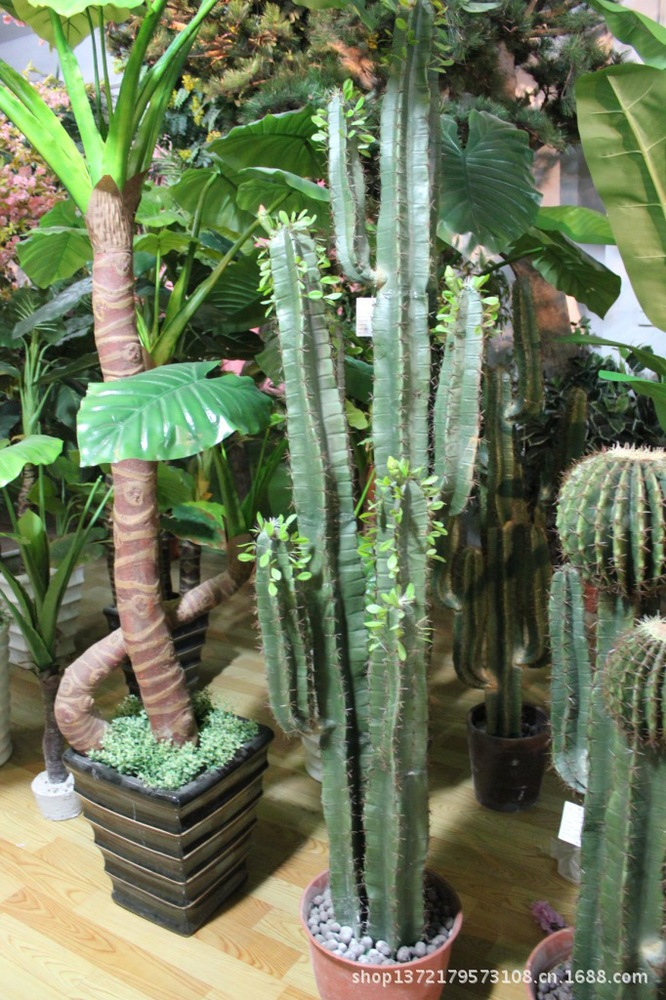 home decor artificielle crafe cactus plantes toutes sortes. Black Bedroom Furniture Sets. Home Design Ideas