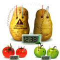 New Energy toys Potato Clock Green Science Electro chemical Cells Electrical energy Conversion Teaching toys Learning