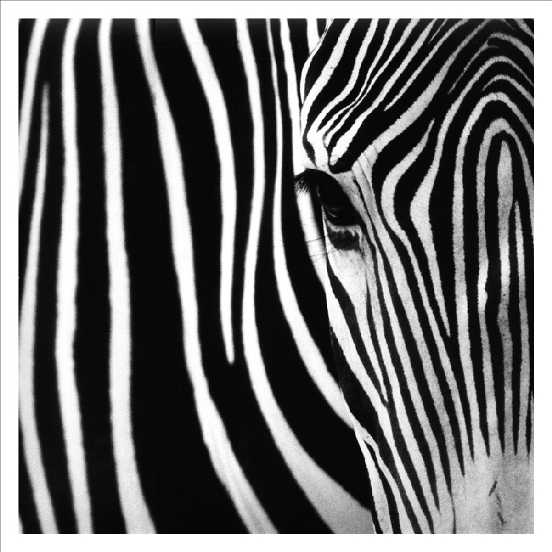 Wholesale-Canvas-prints-black-and-white-painting-printed ...