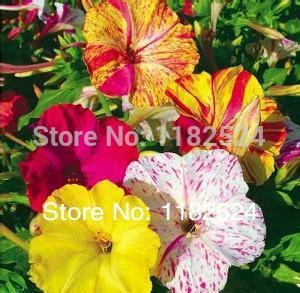 plantes fleur de jasmin promotion achetez des plantes fleur de jasmin promotionnels sur. Black Bedroom Furniture Sets. Home Design Ideas