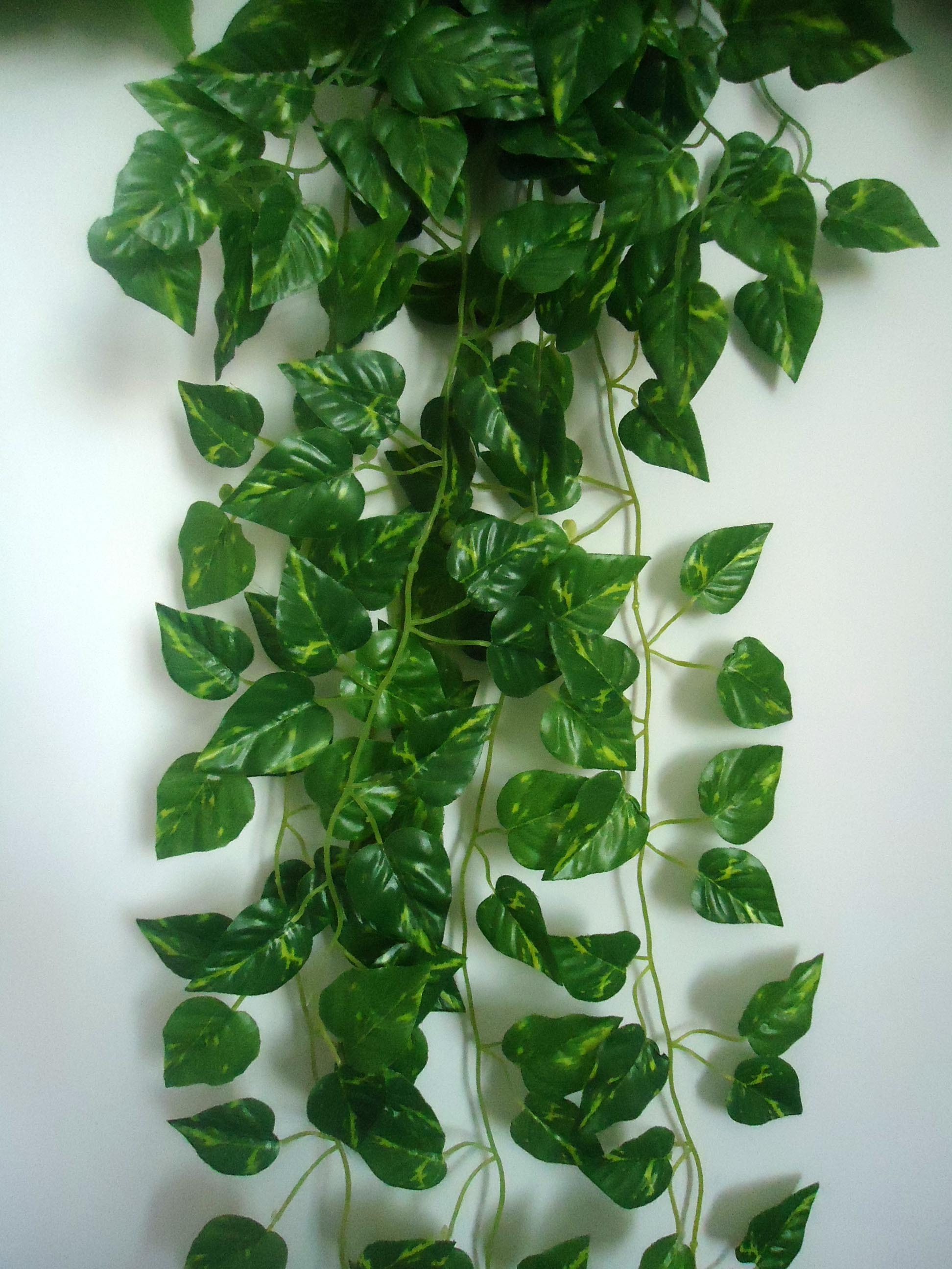 Money Plant Decoration In Living Room: Money Plant