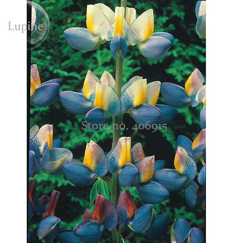 bleu fleur de lupin promotion achetez des bleu fleur de lupin promotionnels sur. Black Bedroom Furniture Sets. Home Design Ideas