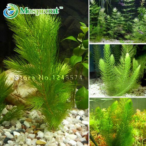 Online Buy Wholesale aquarium plant seeds from China aquarium plant seeds Wholesalers ...