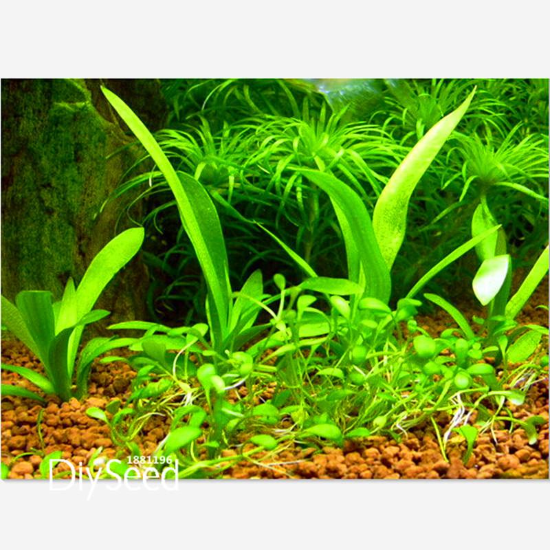 New Arrival!aquarium grass seeds (mix) water aquatic plant seeds (15 kinds) home hydroponics ...