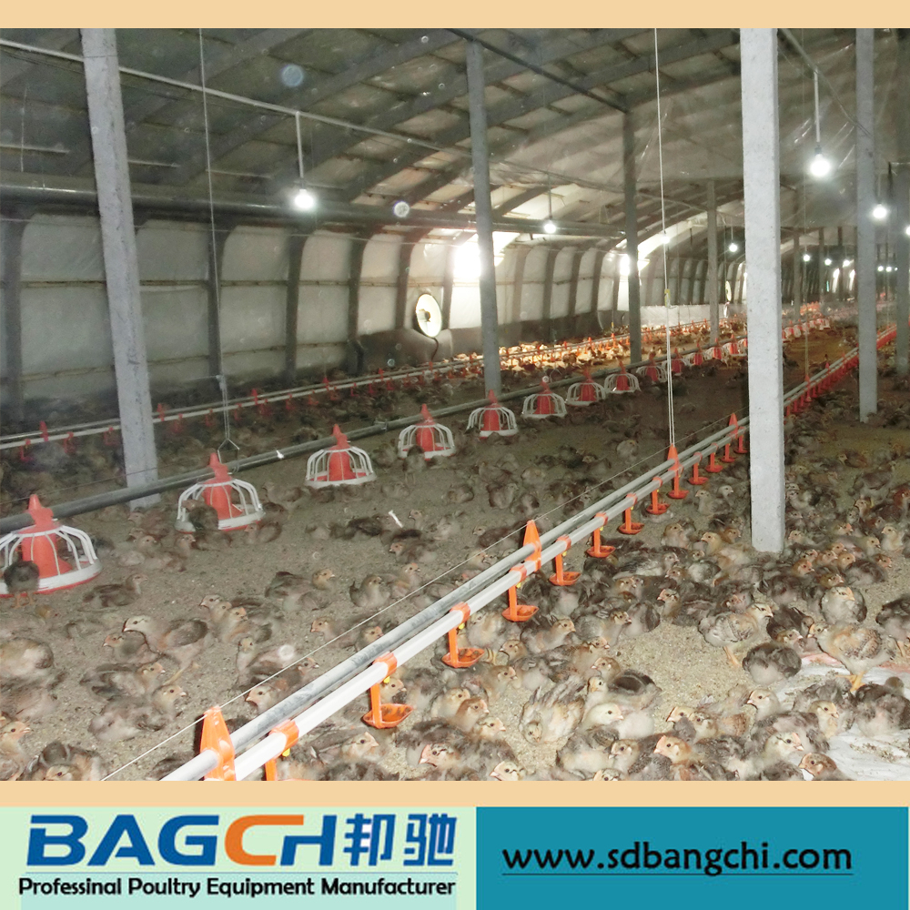 Discount Modern Poultry Farm House Equipment Design