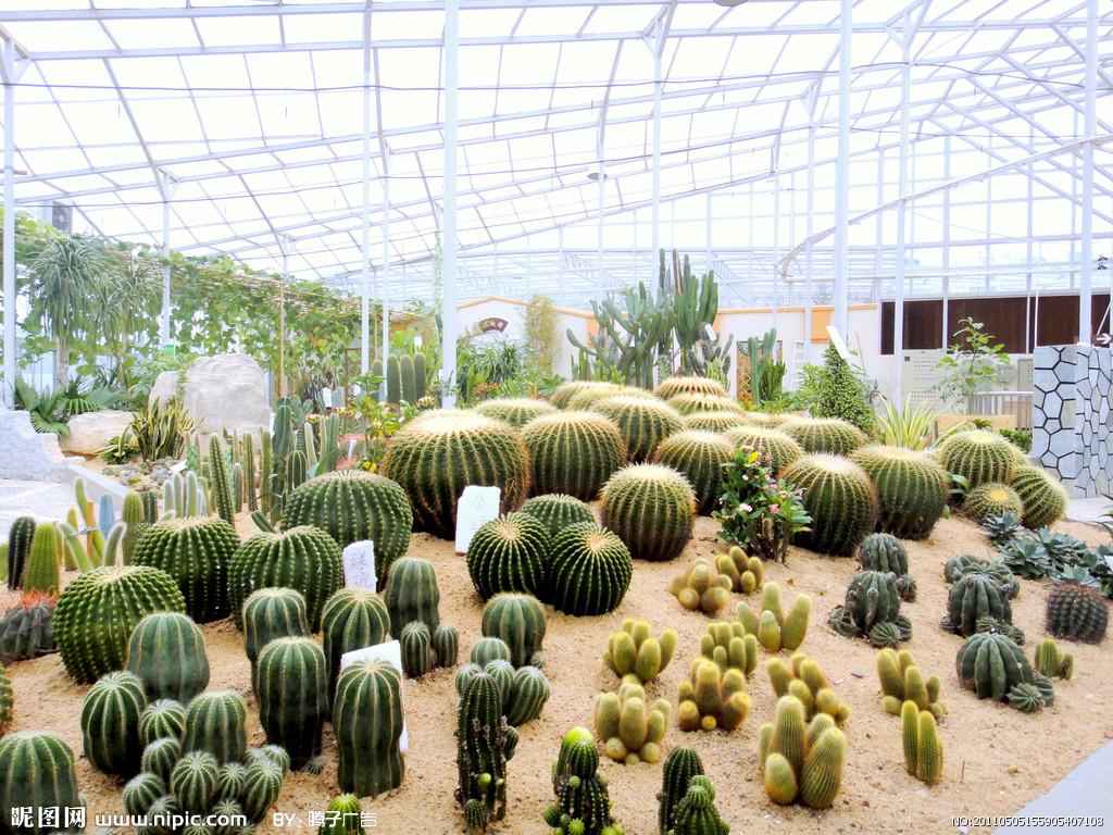facile cactus promotion achetez des facile cactus promotionnels sur alibaba group. Black Bedroom Furniture Sets. Home Design Ideas