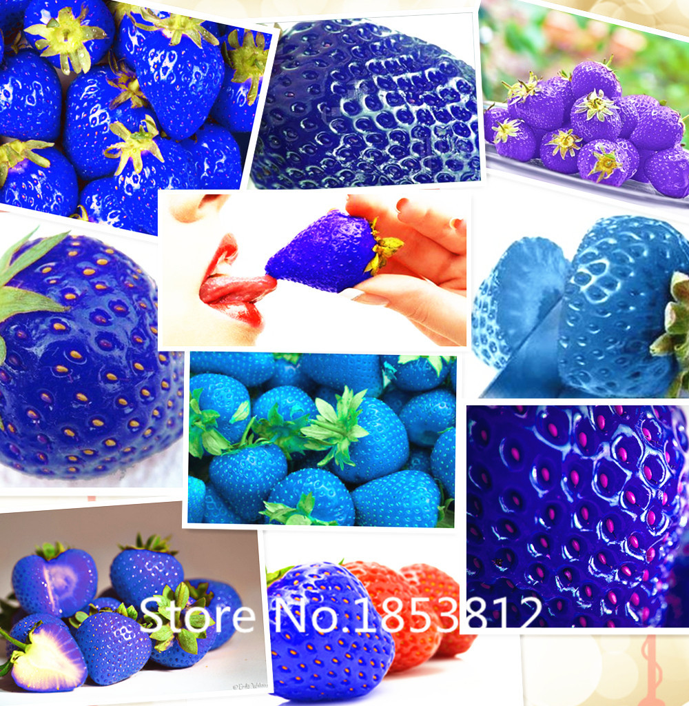 Sale! 500piece 16 Colors strawberries seeds 2016 Rainbow ...