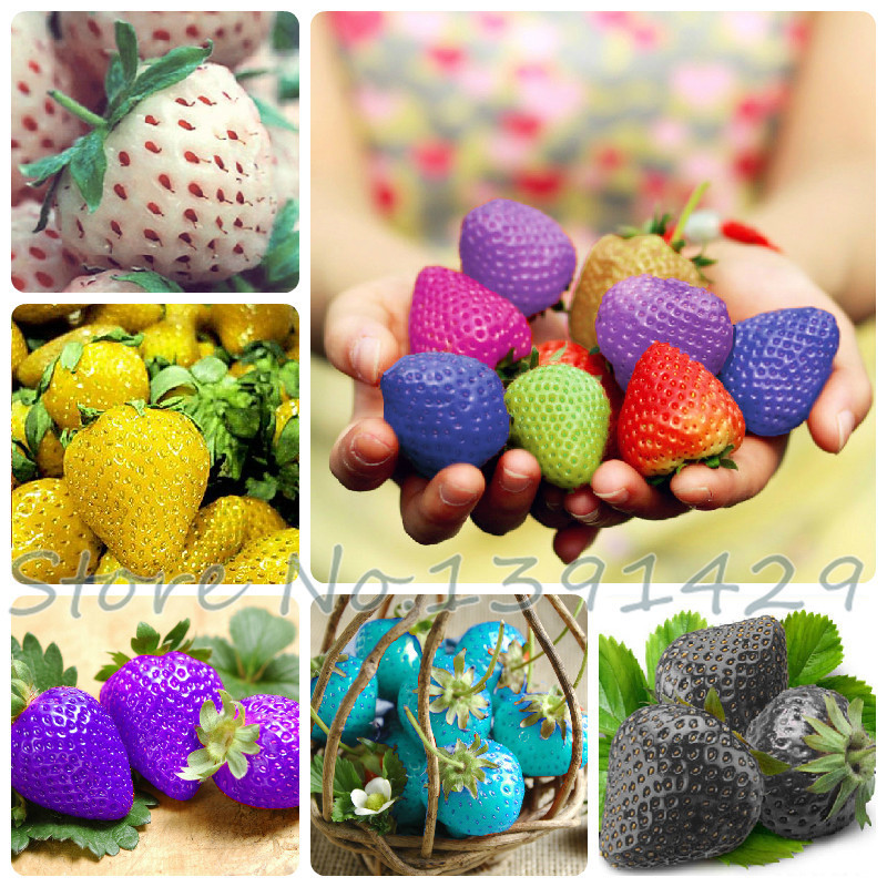 Aliexpress.com : Buy Fruit seeds 300pcs Rainbow strawberry ...