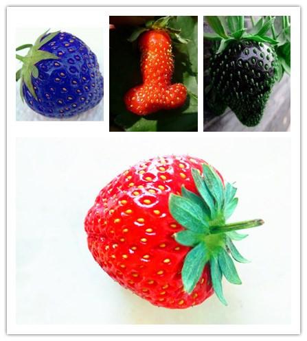 100* PCS/pack Rainbow Strawberry Fruit Seeds Multicolor ...