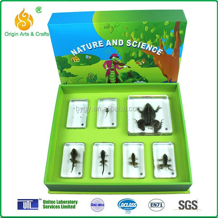 Frog Educational Toys 78