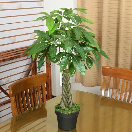 guangzhou gros usine de haute qualit prix artificielle plantes pachira arbre d 39 argent pour. Black Bedroom Furniture Sets. Home Design Ideas
