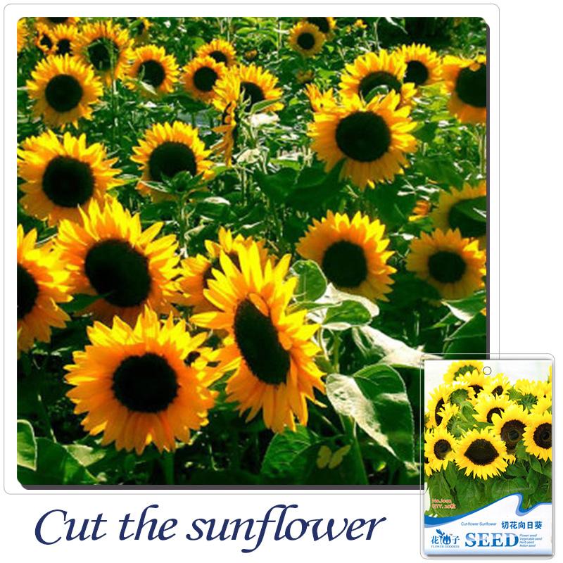 online get cheap sunflower yellow seeds -aliexpress | alibaba