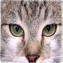 TAFREE животные глаза квадратная форма стекло кабошон изображение 25 мм стеклянные драгоценные камни ювелирные изделия для брелка ожерелье ак...(Китай)
