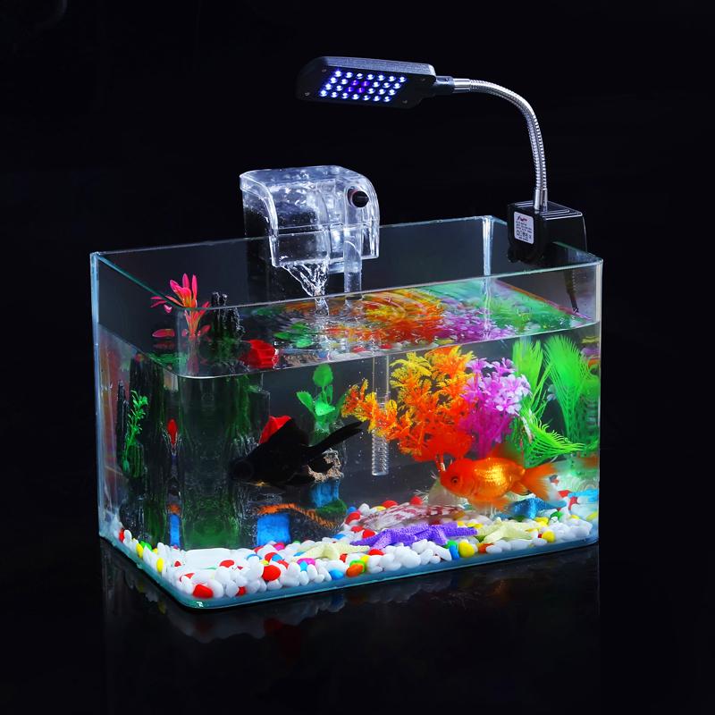 Worlds smallest aquarium with fish