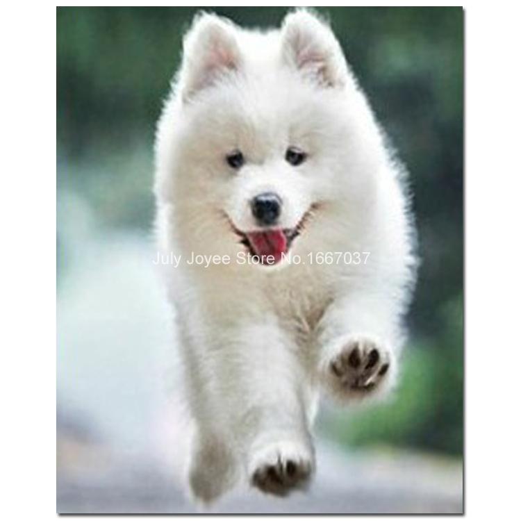 petit chien blanc mignon chiot diamant broderie animaux. Black Bedroom Furniture Sets. Home Design Ideas