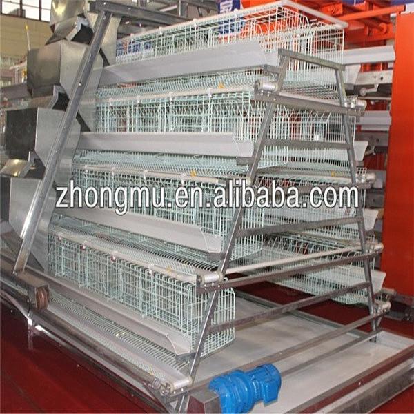 High quality automatic chicken/quail farm equipment for ...