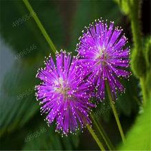 100 шт. Мимоза цветы украшение для дома(Китай)