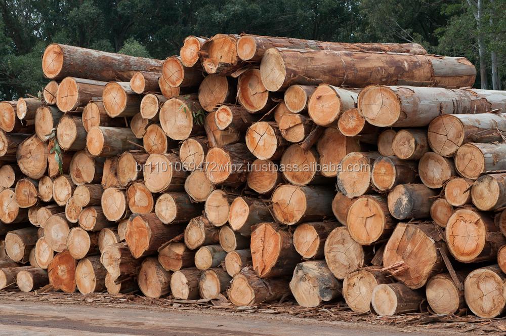 Buy Logs,Wood Logs,Eucalyptus
